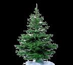 Brandvertragende Kerstbomen