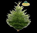 Nordmann Kerstboom 150 cm geimpregneerd