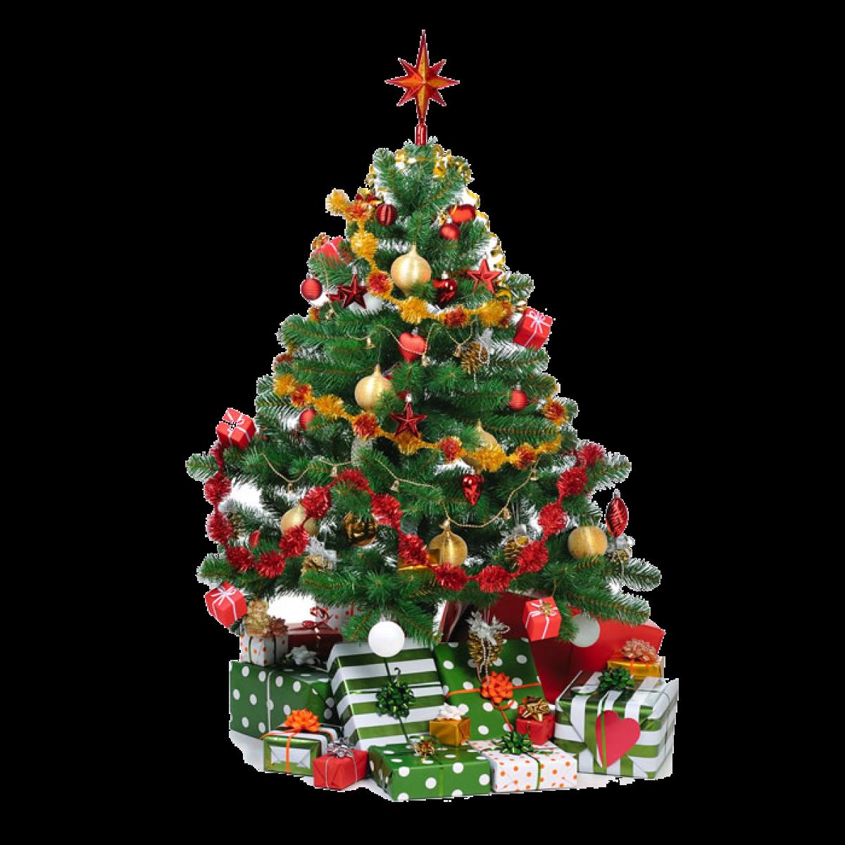 Nordmann Kerstboom 300 Cm Geimpregneerd