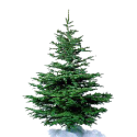 Kerstboom Impregneren